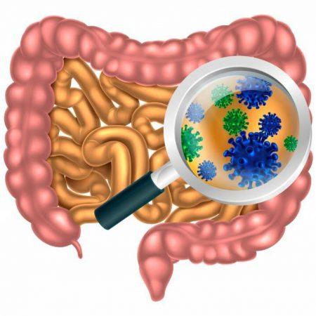 Общие вопросы инфекционных болезней. Кишечные инфекции и инвазии