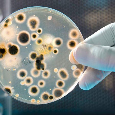 Бактериология. Избранные вопросы